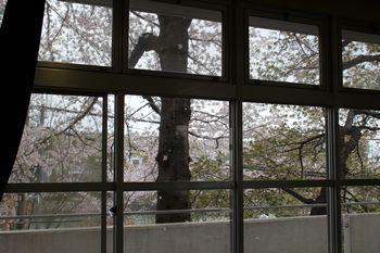 視聴覚室桜